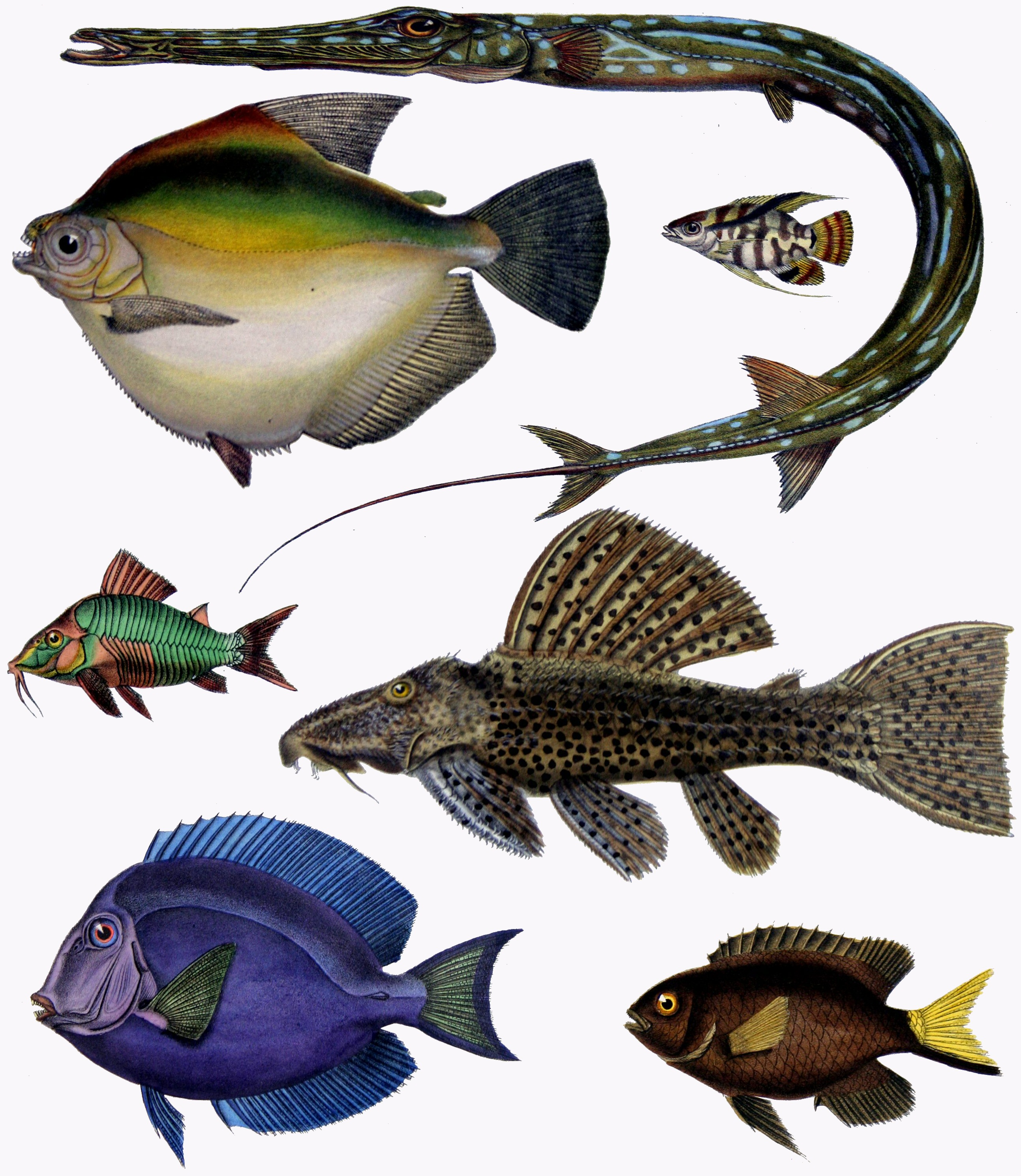 f_de_castelnau-poissons_-_diversity_of_fishes_composite_image