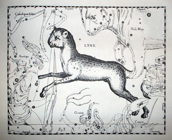 johannes_hevelius_-_prodromus_astronomia_-_volume_iii_firmamentum_sobiescianum_sive_uranographia_-_tavola_y_-_lynx