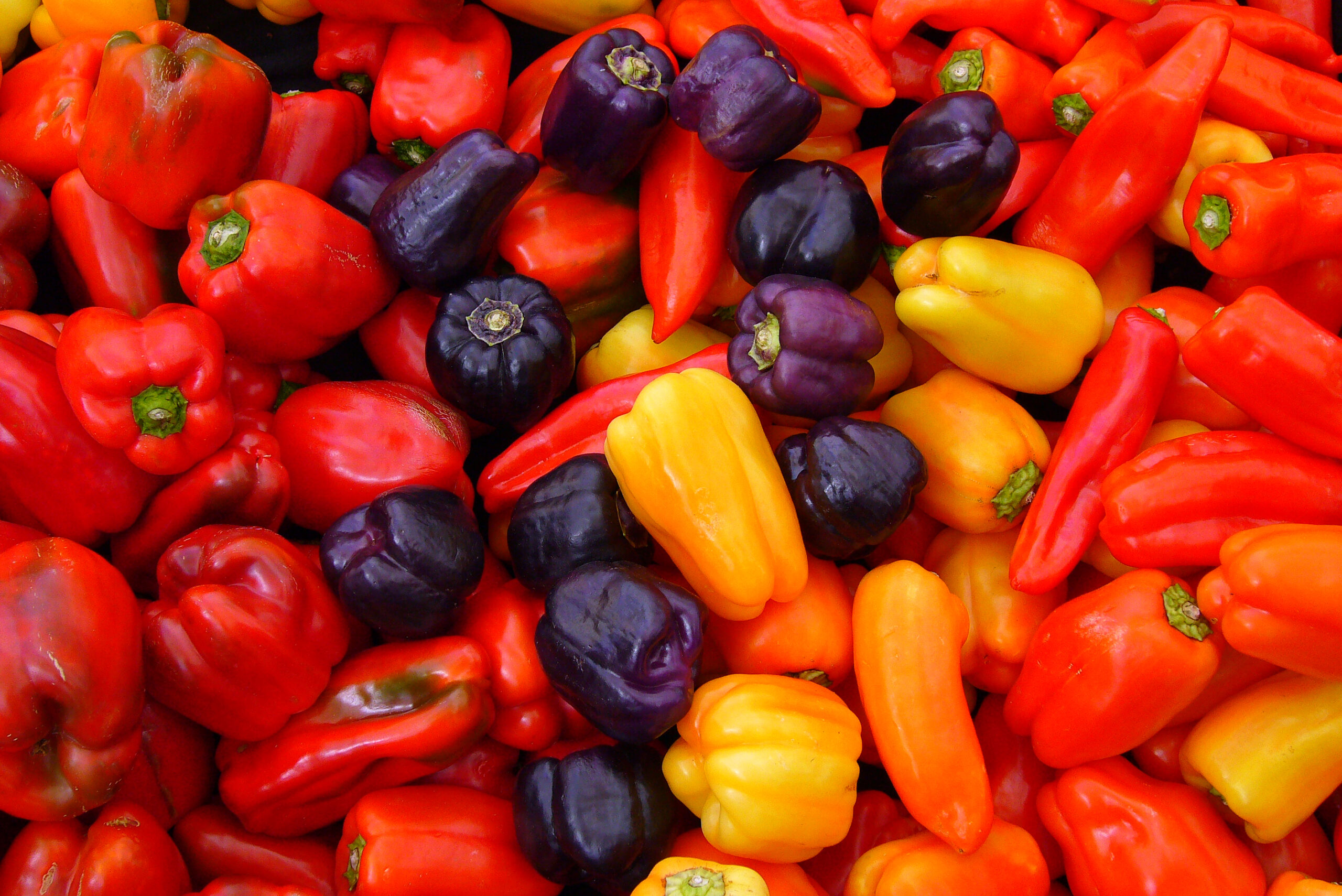 Pile of colorful bell peppers